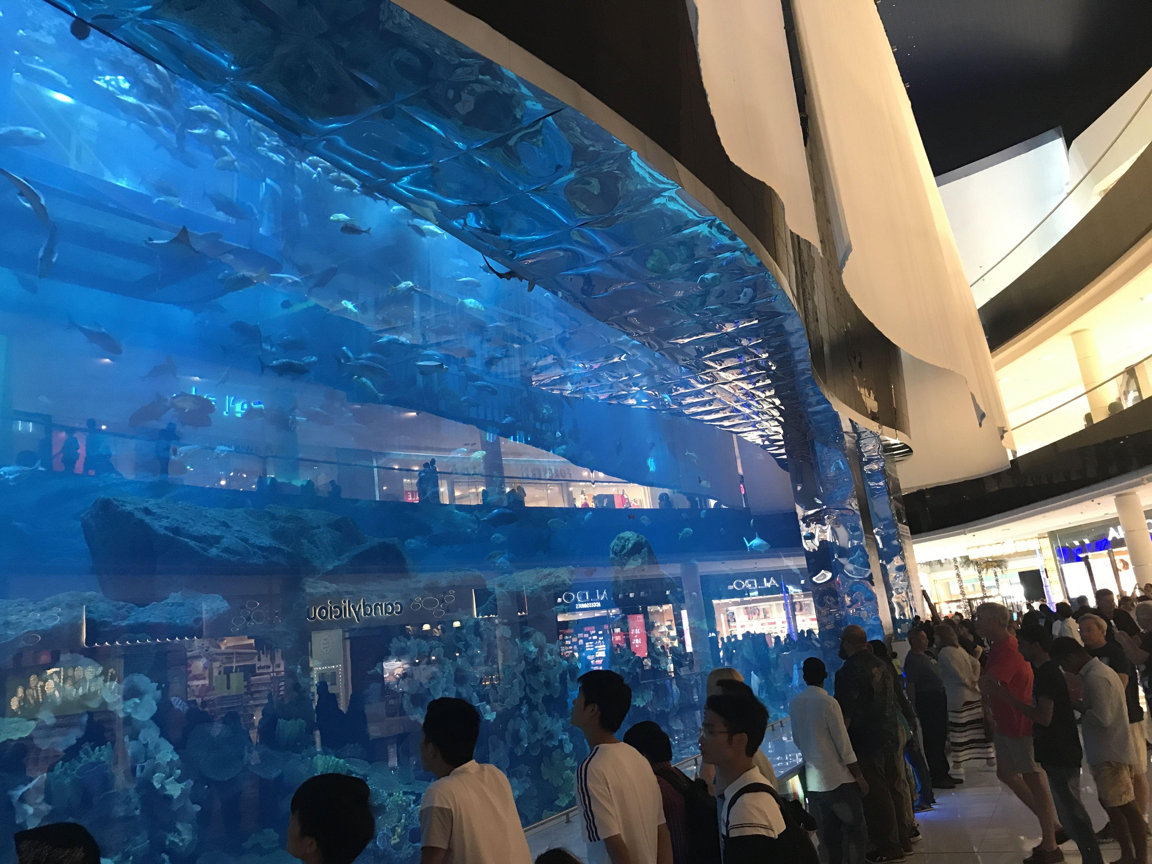 Dubai mall aquarium (With images) | Dubai mall, Dubai ...