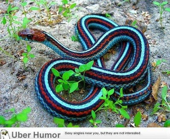 Neon Blue Garter Snake