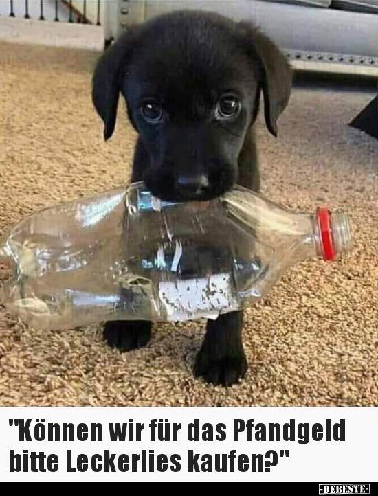 Galerie Hundeschule Schweinfurt Zum Weg Des Vertrauens