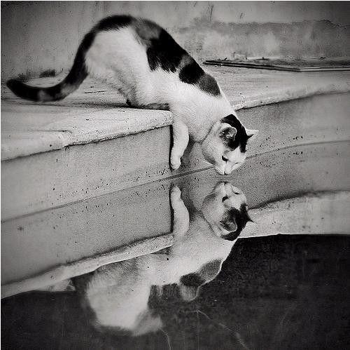 Dos Gatos.
