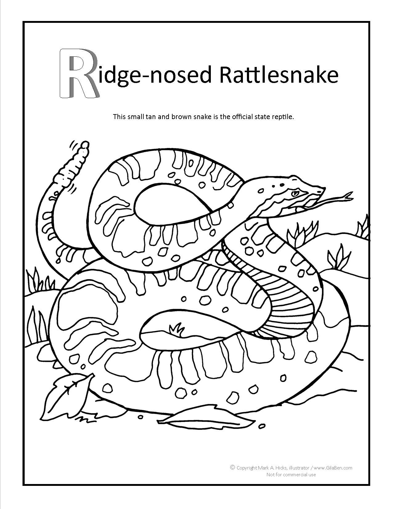 Ridge-nosed Rattlesnake Coloring page at GilaBen.com | Arizona ...