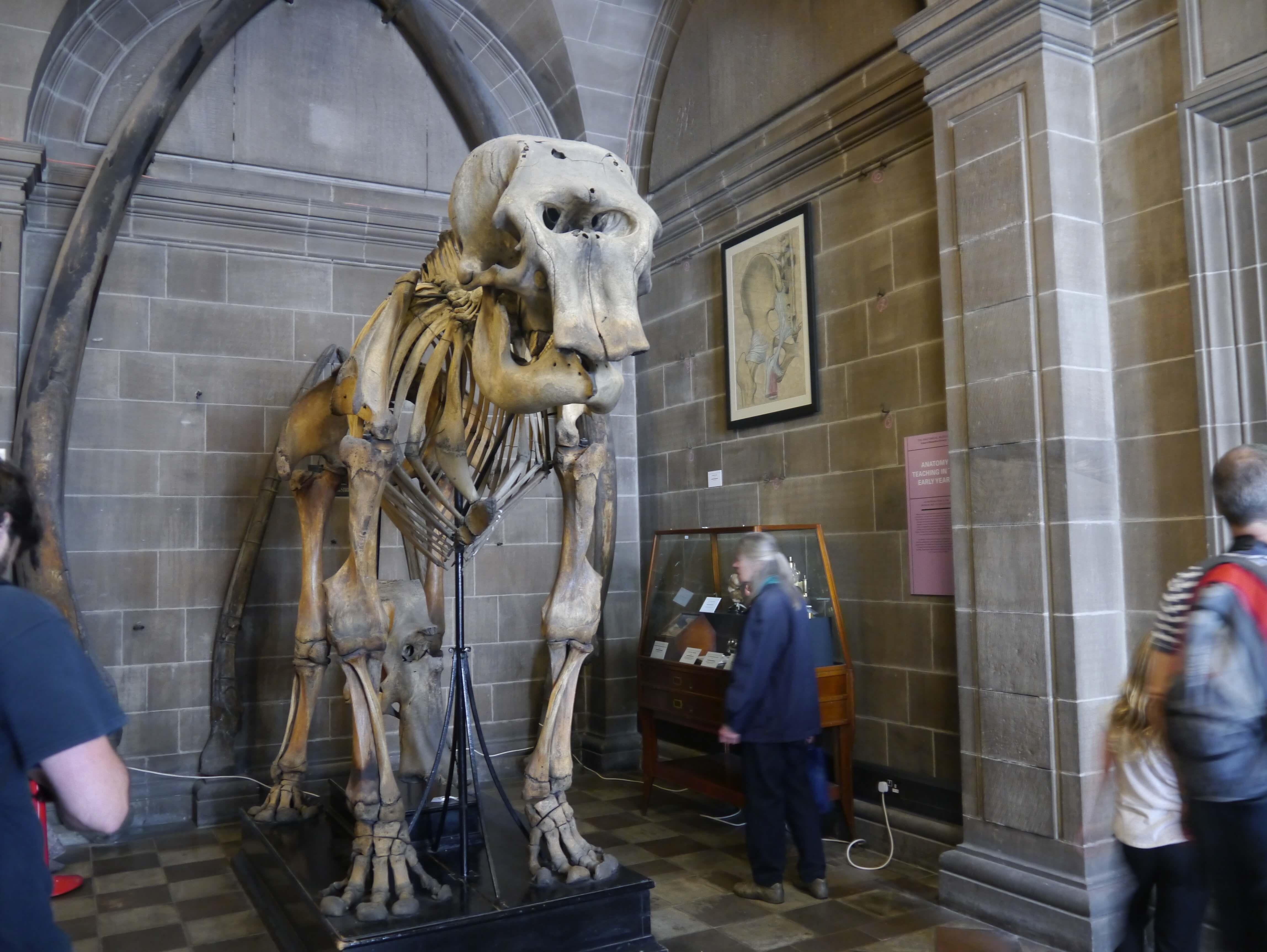 Anatomical Museum Free Things To Do In Edinburgh Travel