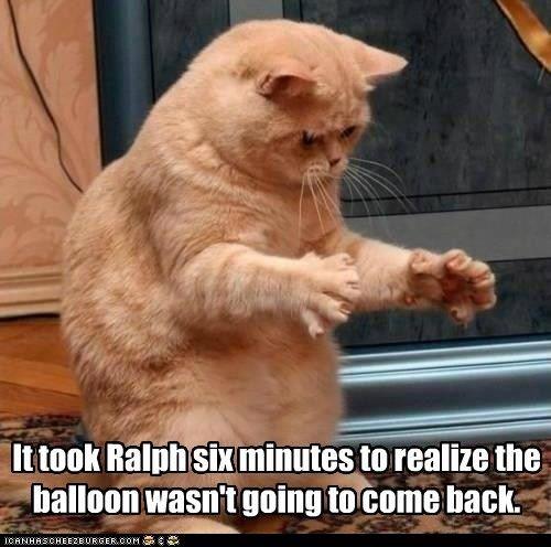 Surprised Cat! LOL!