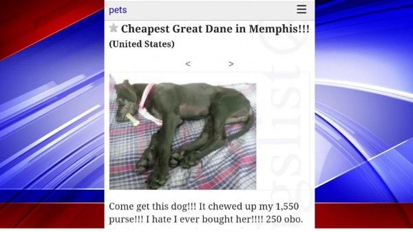 Prosecute Memphis woman that neglected her dog, used ...