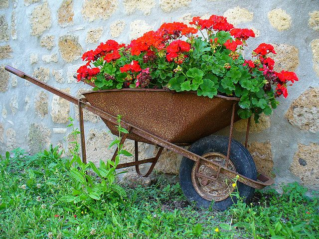 wheelbarrow gardens pinterest red geraniums wheelbarrow planter and rust. Black Bedroom Furniture Sets. Home Design Ideas