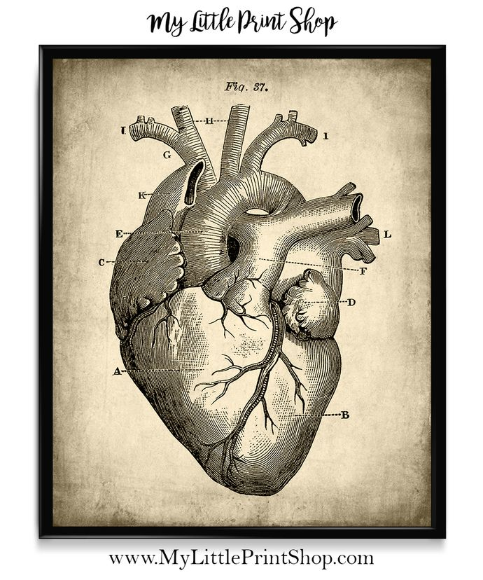 Vintage Heart Anatomy | Pinterest | Heart anatomy, Vintage heart and ...