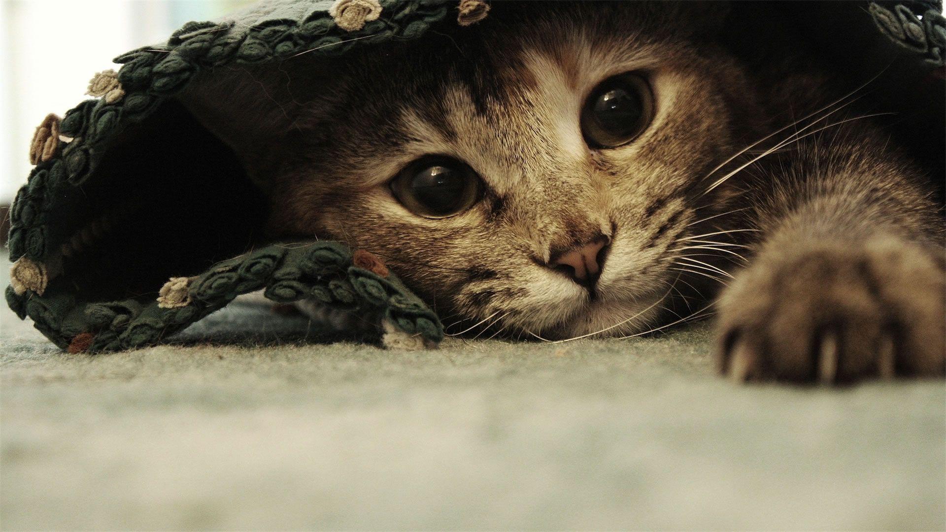 Maka z alostnim pogledom domae ivali pinterest funny cat cat wallpaper voltagebd Gallery