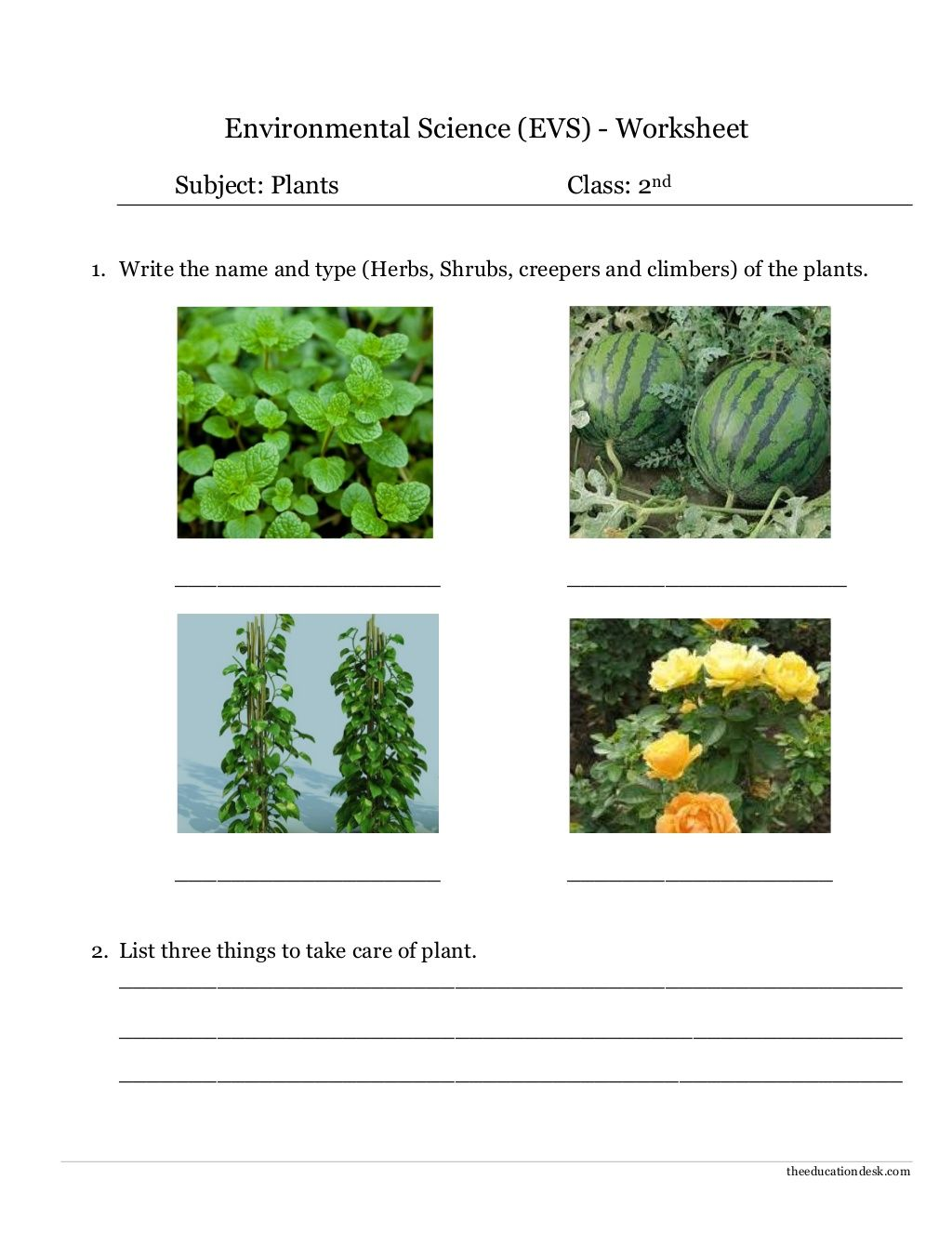 Environmental Science (EVS) : Plants Worksheet (Class II) by ...
