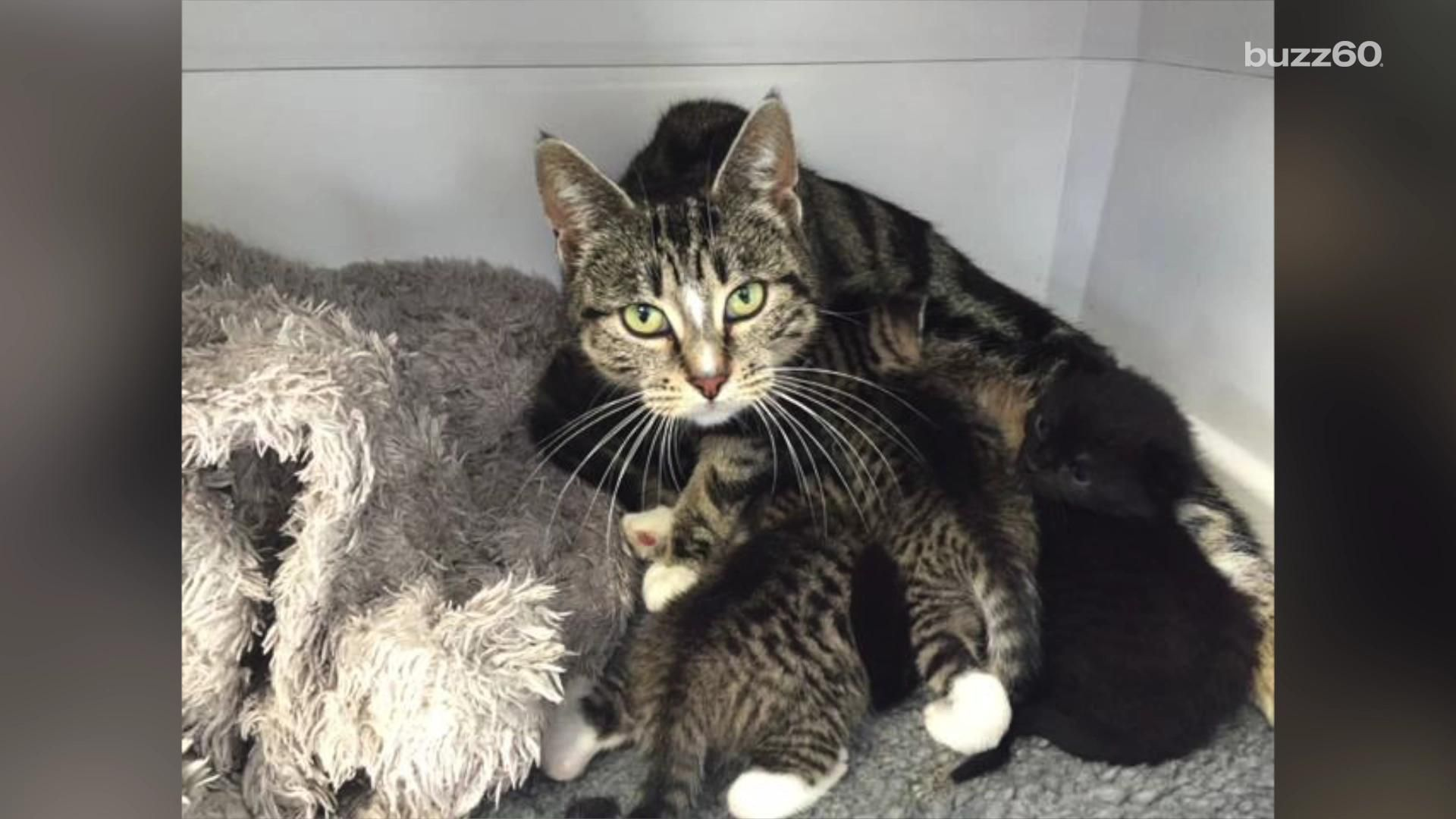 Mother Cat Breaks Into Vet Clinic To Be With Her Abandoned Kittens R Nature Mama Cat Cats Kittens