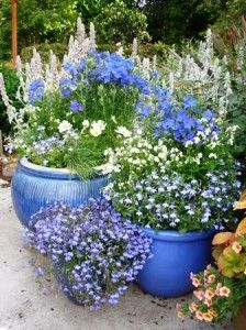 Great ideas for a patio collection of potted plants. #shadecontainergardenideas