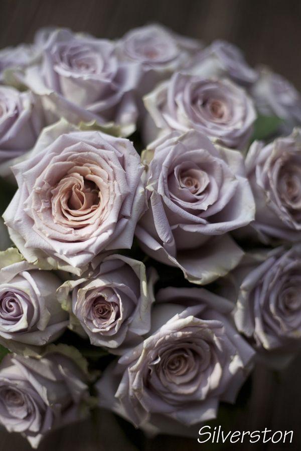 The Lavender Purple Rose Study Flirty Fleurs The Florist Blog Inspiration For Floral Designers Purple Roses Flowers Rose Varieties