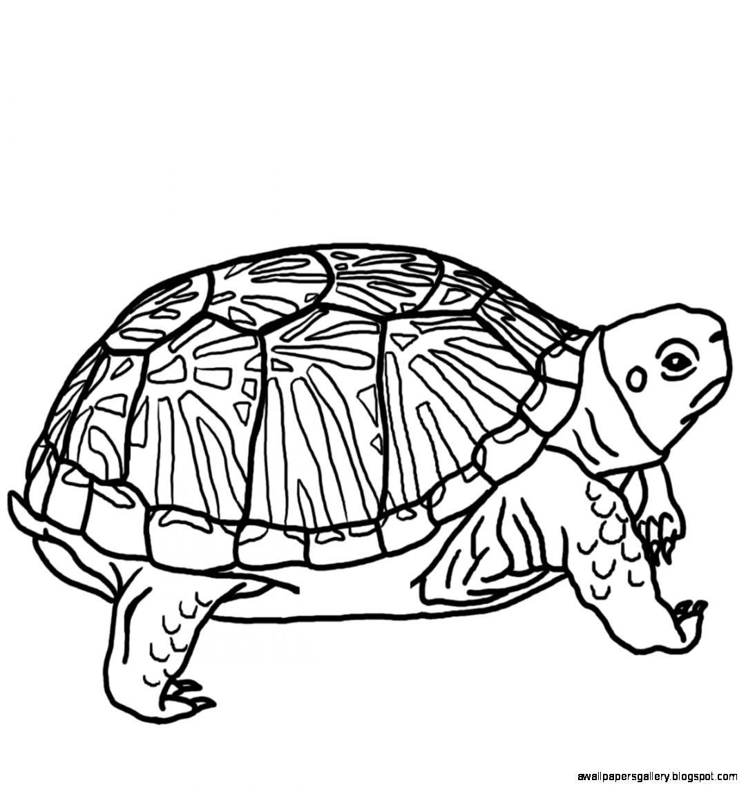 Turtle Clipart Black And White Wallpapers Gallery