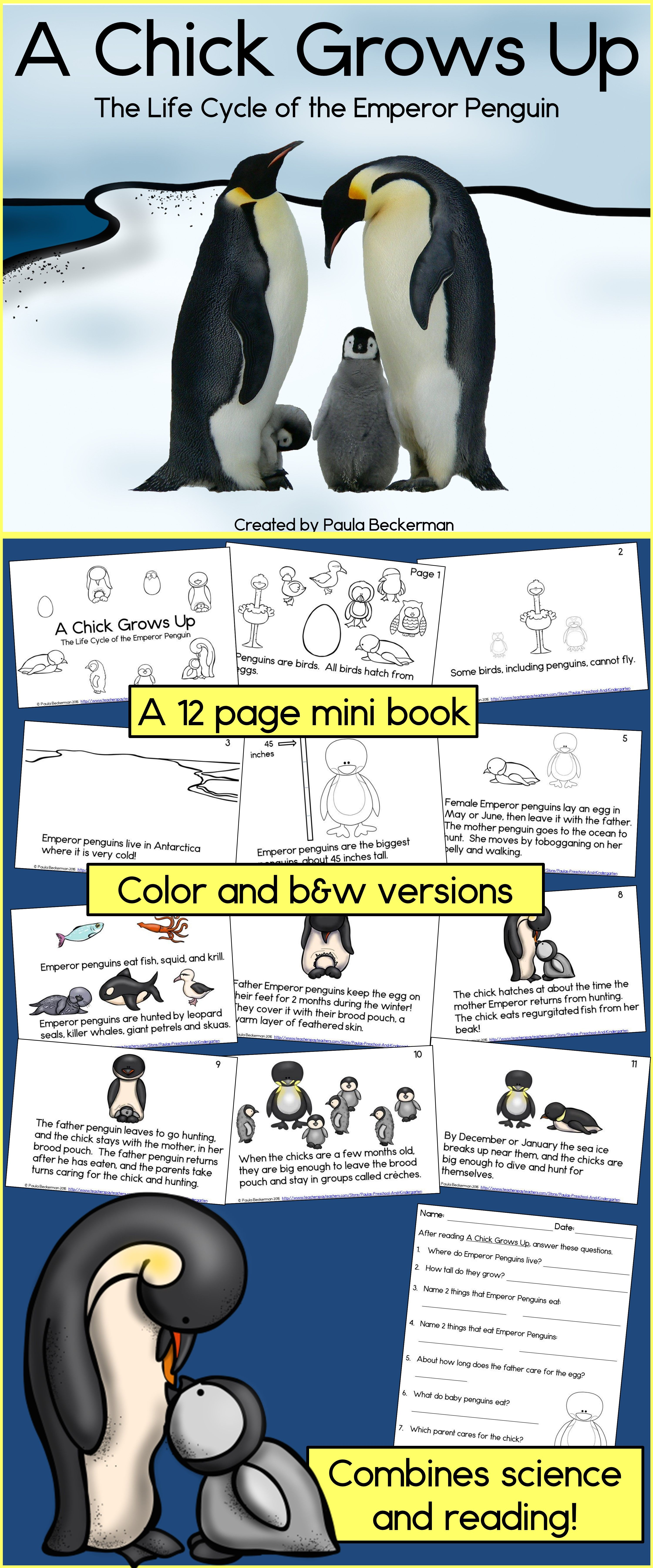 Penguin Life Cycle Guided Reading Book