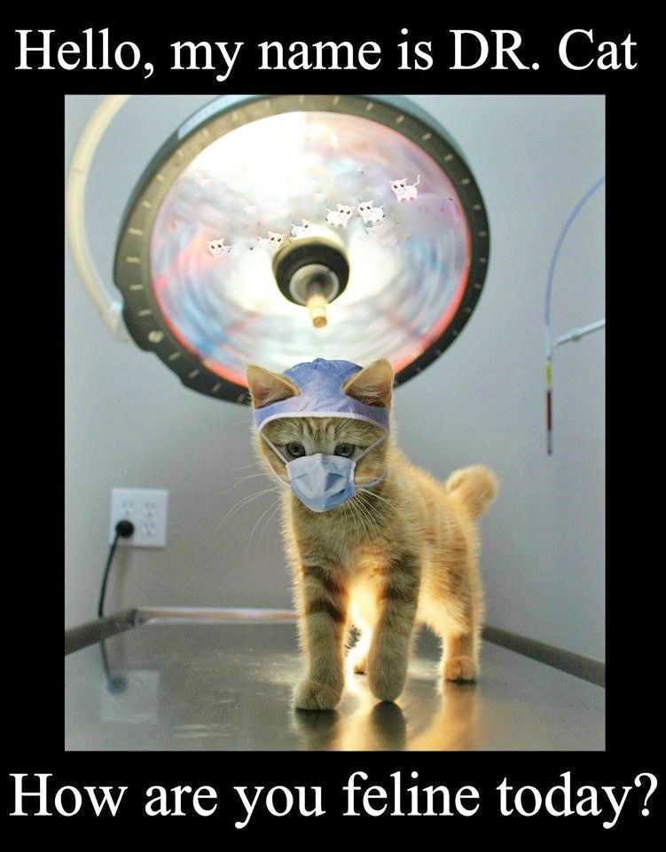 Pin By Deb Cosby On Nursing Kittens Funny Memes Cat Jokes Funny Animal Pictures