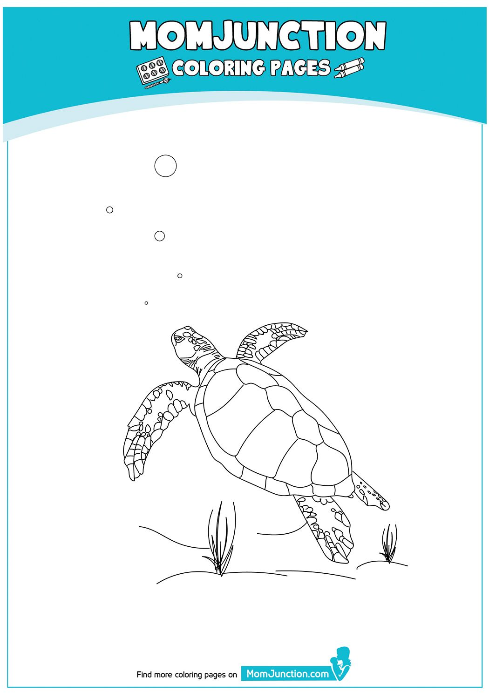 Print Coloring Image Momjunction Turtle Coloring Pages Coloring Pages Color