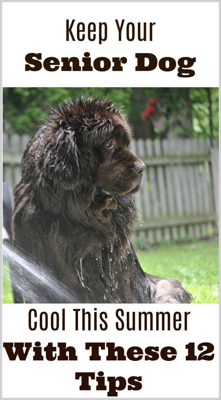 12 Ways to Keep Your Pet Cool in the Summer