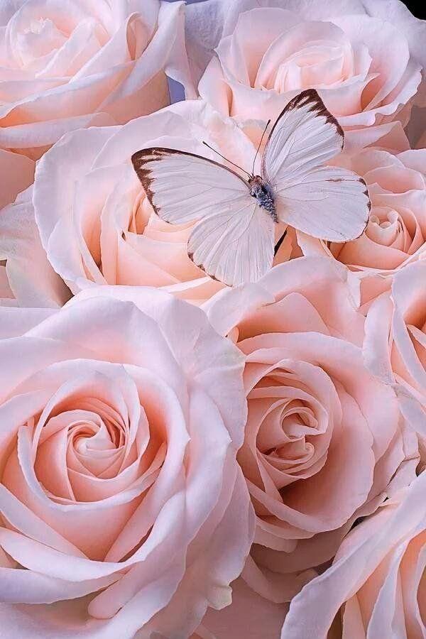 Beautiful2me