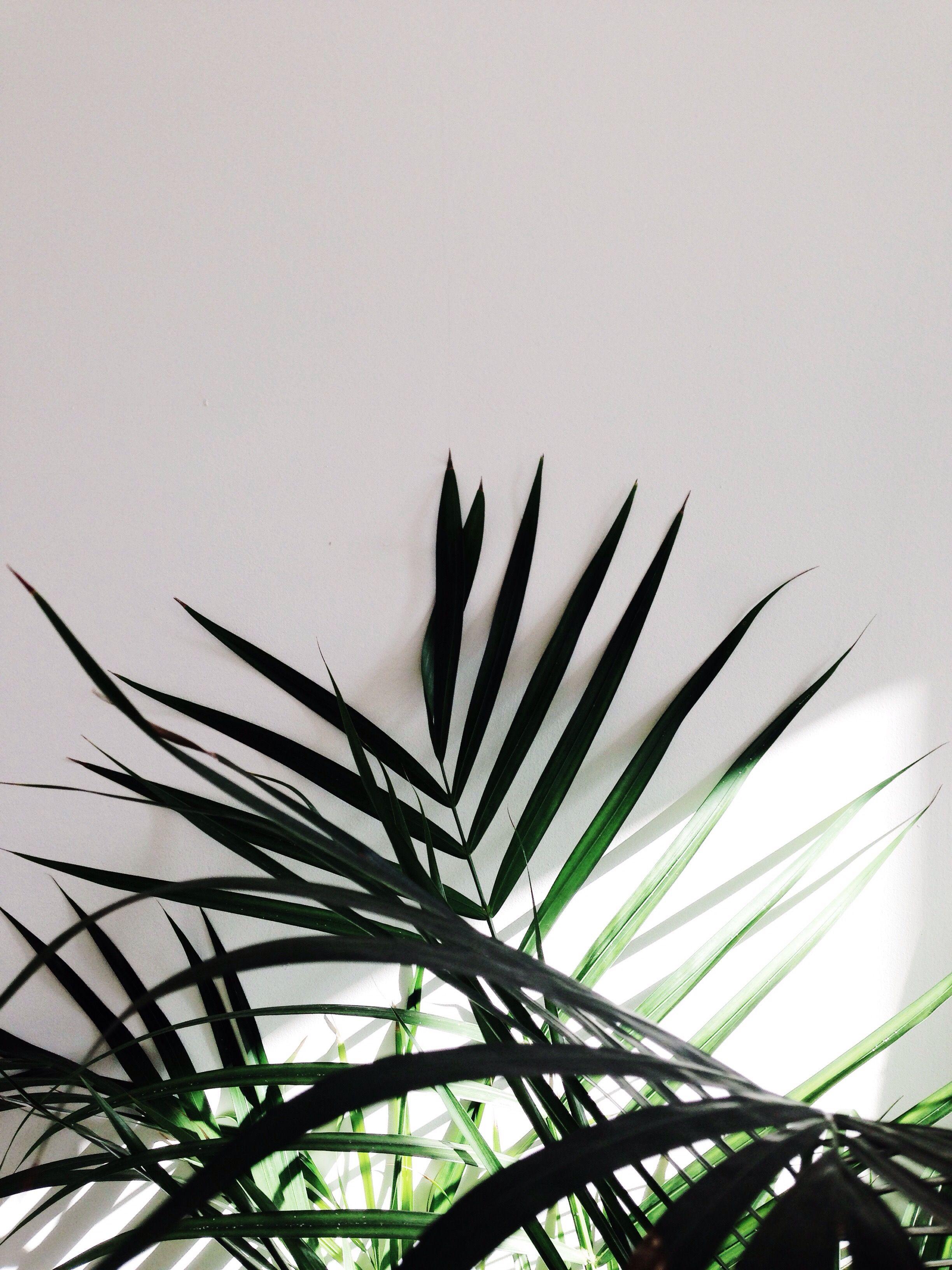 lumi re vegetal n12 green pinterest vegetal. Black Bedroom Furniture Sets. Home Design Ideas