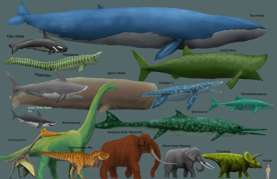 Megafauna size comparison char by ~Harry-the-Fox on ...