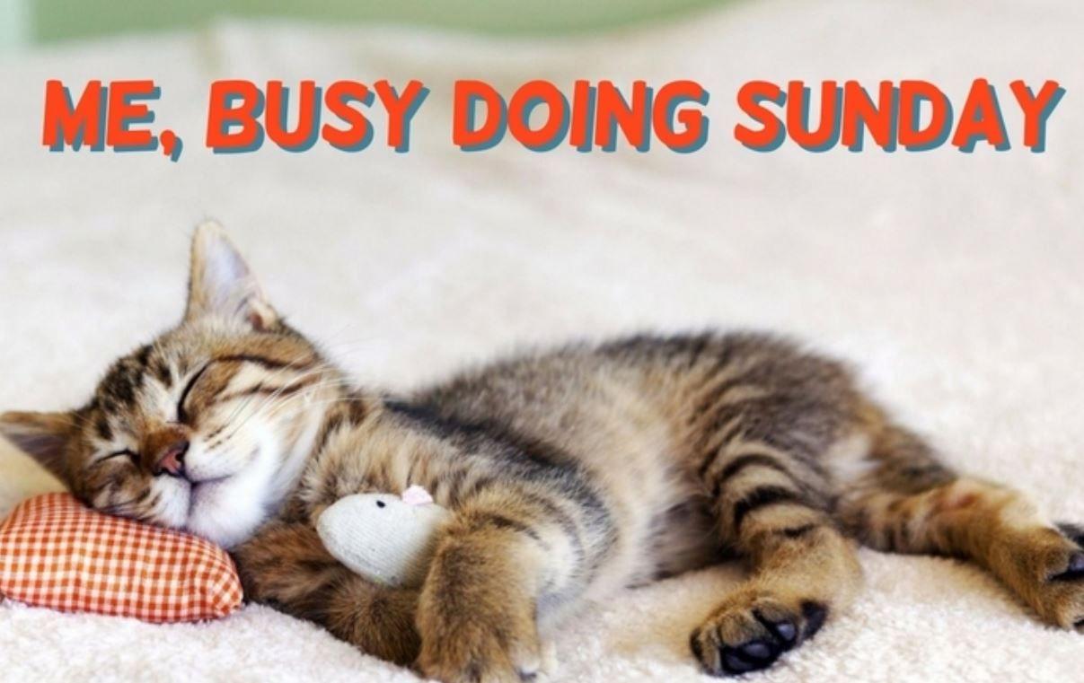 Happy lazy Sunday! #sunday #rustichomedecor #woodsigns #rusticchic  #cabindogcreations #petsigns #petme… | Happy sunday quotes, Sunday quotes  funny, Good day images