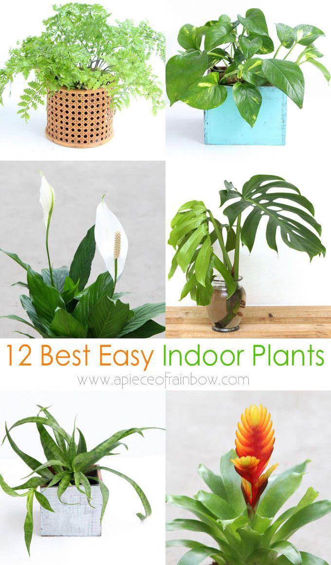 Grow Beautiful Indoor Plants In Water So Easy Hanging 400 x 300