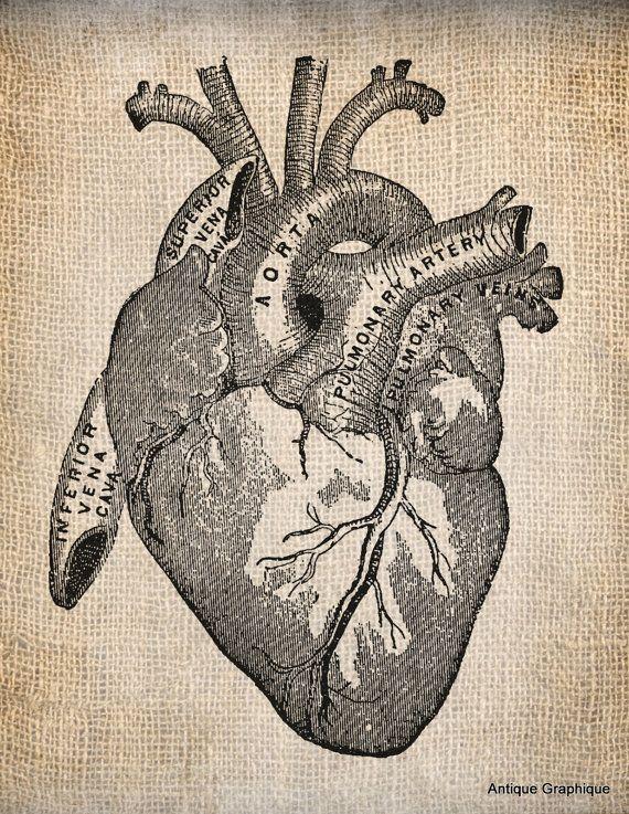 Antique Heart Anatomy Illustration Digital Download For Papercrafts