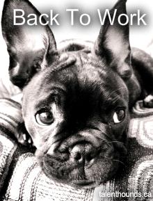 Back To Work Talent Hounds Funny Dog Memes Dog Marketing Back To Work