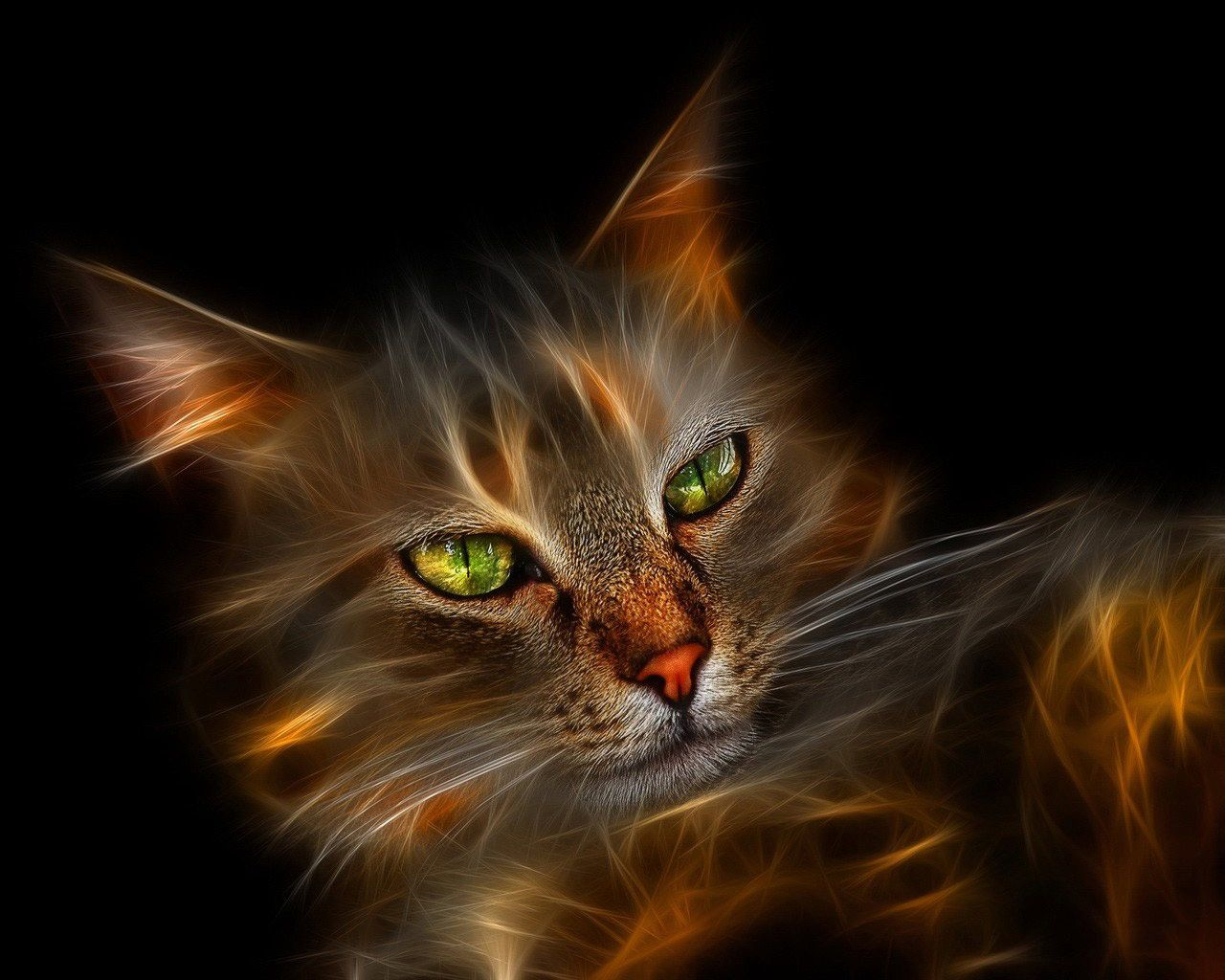 Cat Eyes Neon cat, Cat art, Pretty cats
