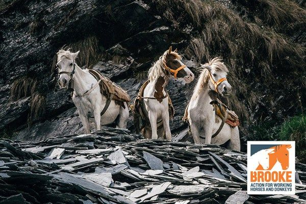 The Brooke equine charity is moving into a new chapter, with a new brand, logo and website.