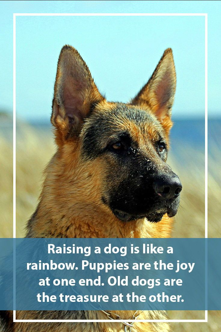 42 dog sayings which will touch your heart dogs dog
