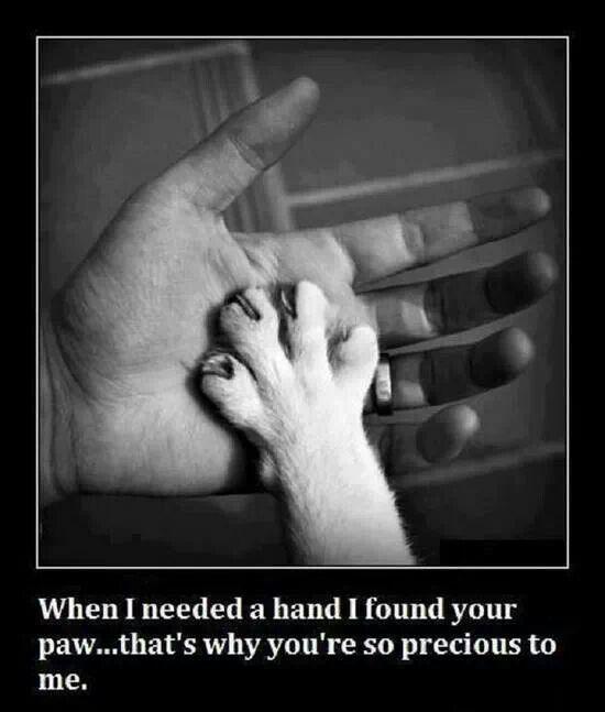 Hand in paw you're always my best friend