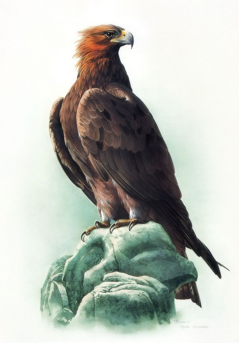Орел картинки для детей