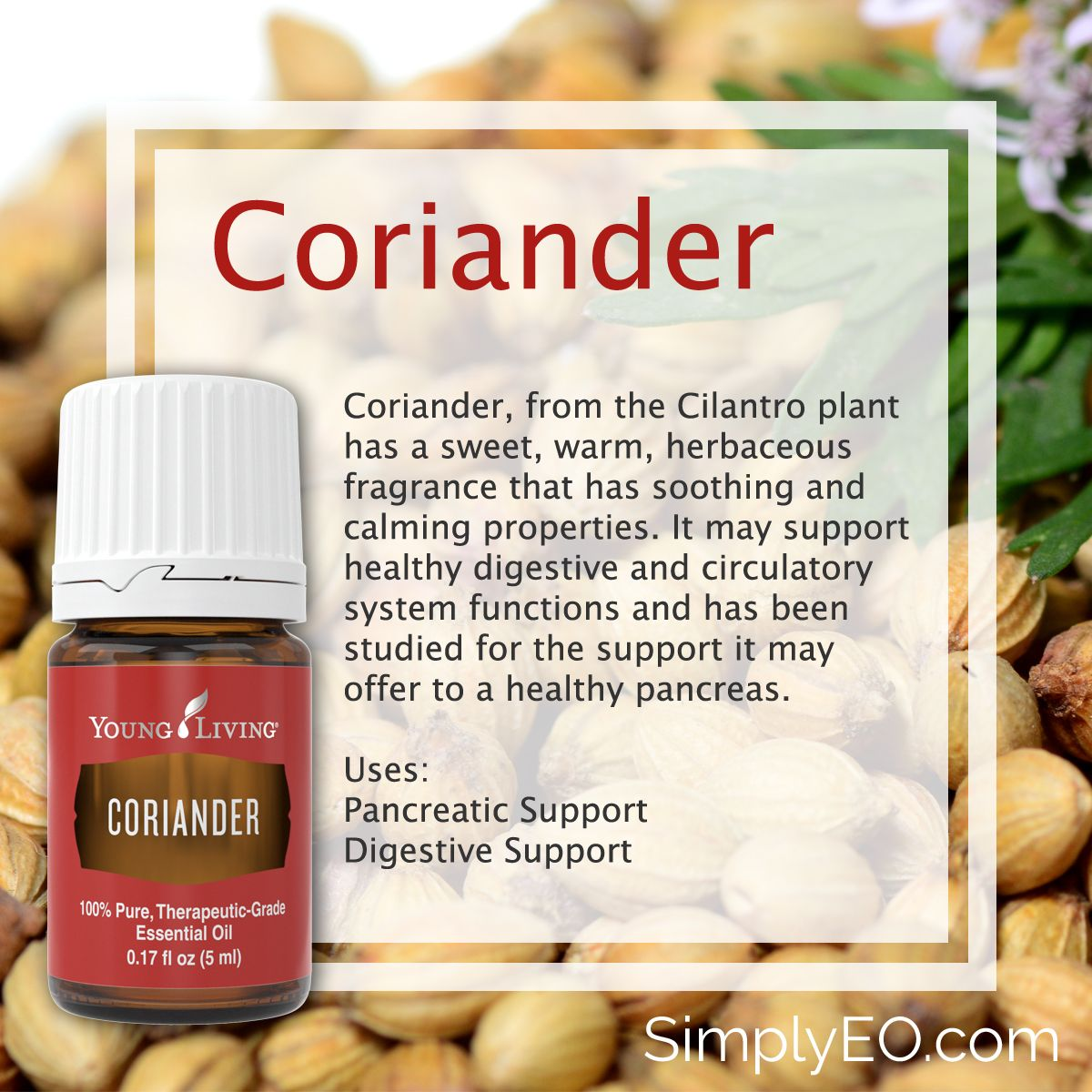 did you know that coriander plant leaves are cilantro? this