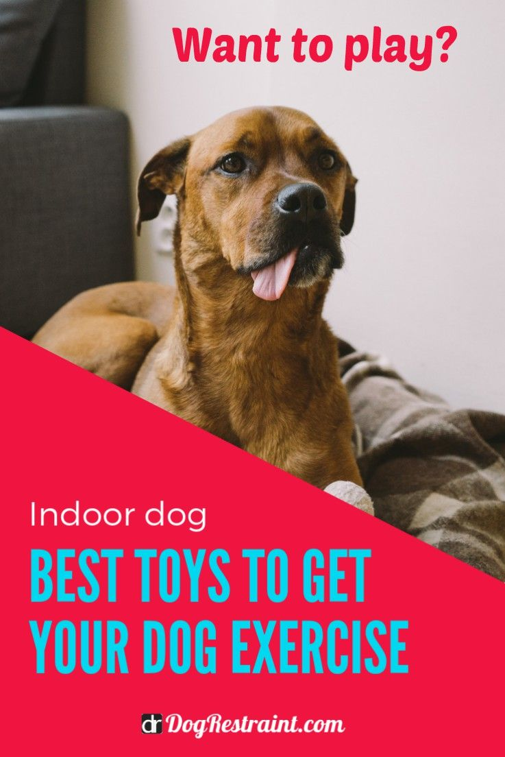 Indoor Dog Exercise Toys Dogs Dog Training Cool Toys