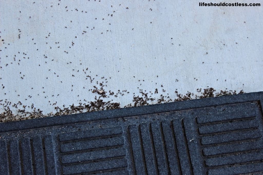 How To Effectively Kill Ants (using only water) LIFE