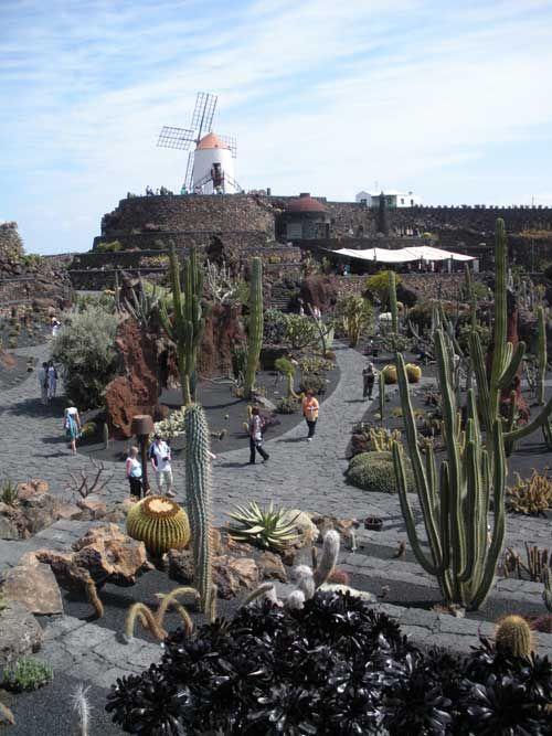 Lanzarote. The cactus gardens Guatiza Kakteenfelder, so weit das ...