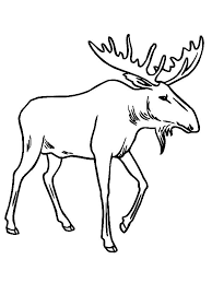 image result for moose nh wildlife drawings moose coloring pages