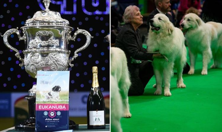 Crufts 2020 Winner Winner Of Best In Show Revealed Who Won