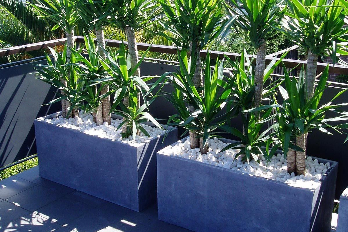 Troughs planted with tall yucca 39 s create privacy for Tall planters for privacy