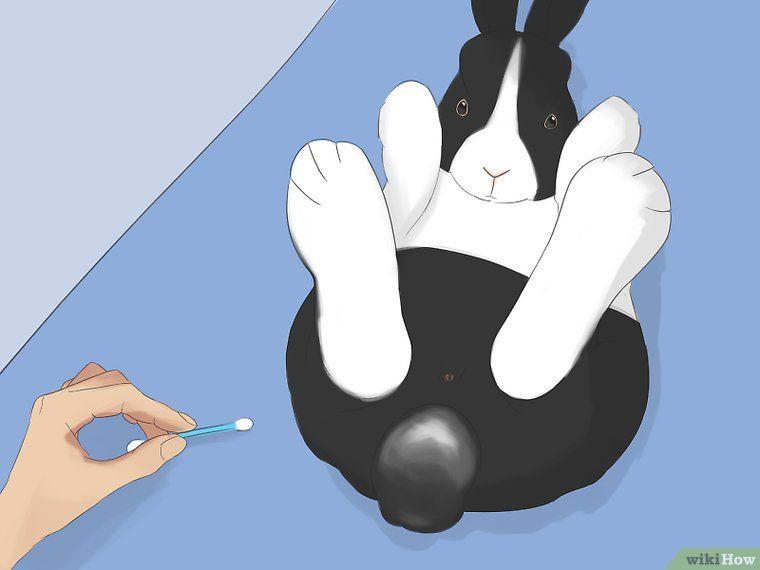 Bathe Your Pet Rabbit Your Pet Pets Pet Rabbit