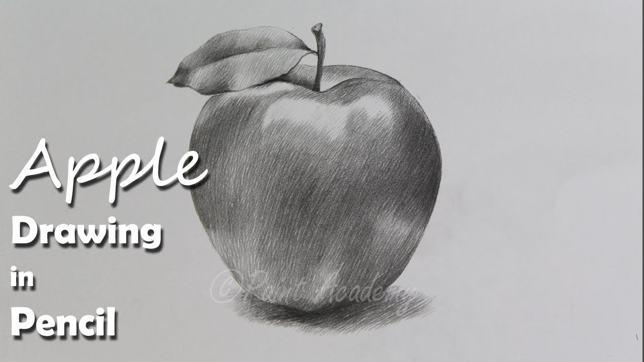 How to Draw An Apple in Pencil step by step how to use