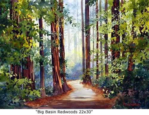 big basin redwoods 22x30 watercolor
