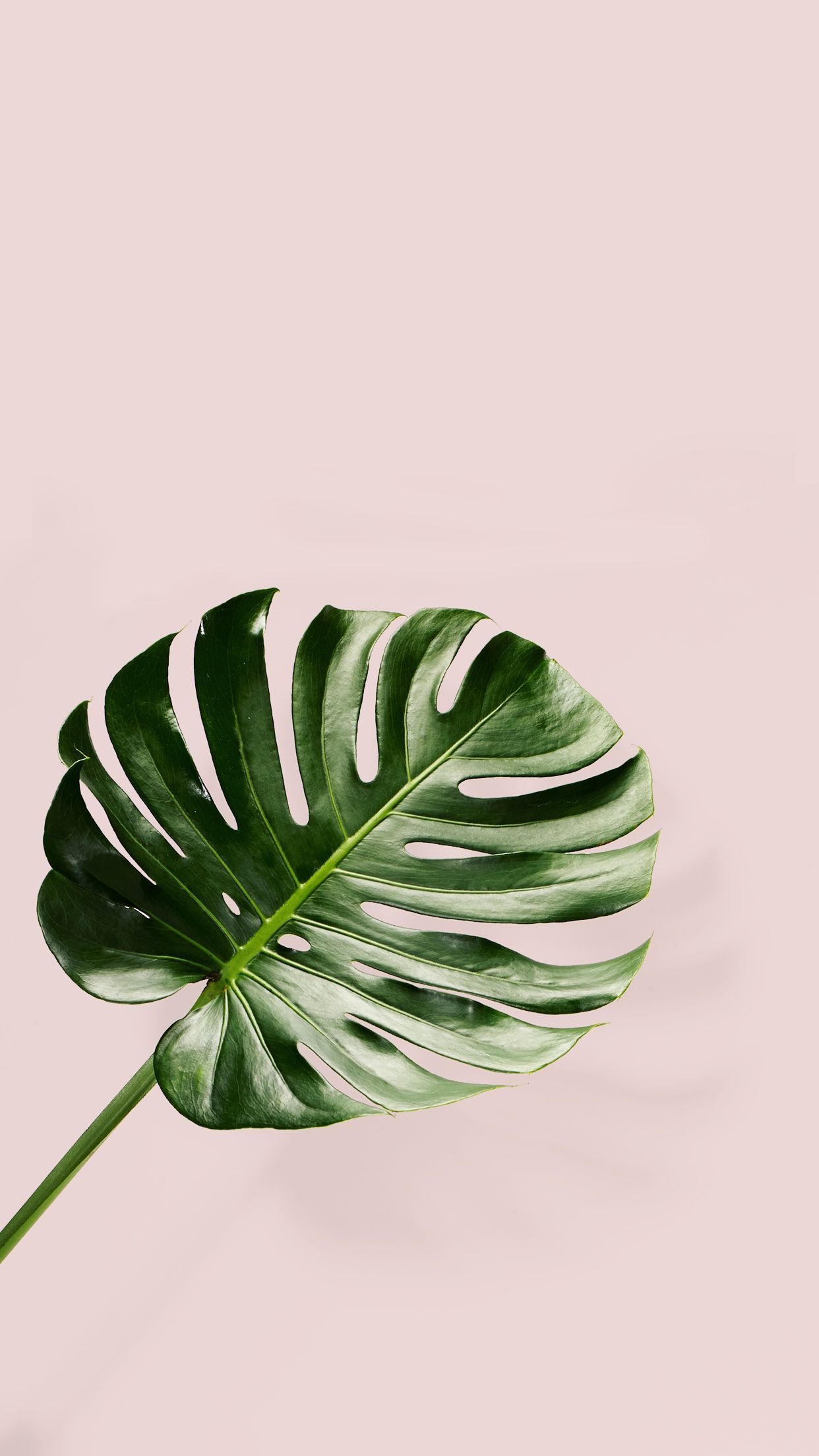 INSPIRATION 16 / PINK AND GREEN Plant wallpaper, Palm