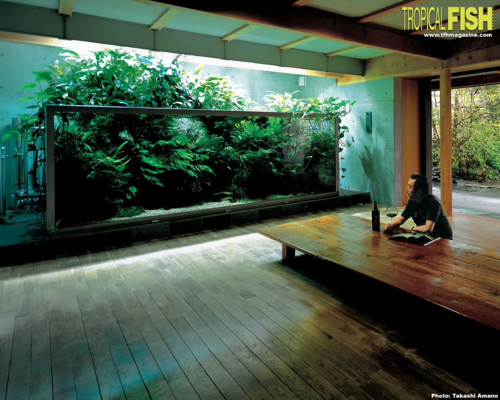 Aquarium uncovered as humidifiers and beautiful home Beautiful aquariums for home