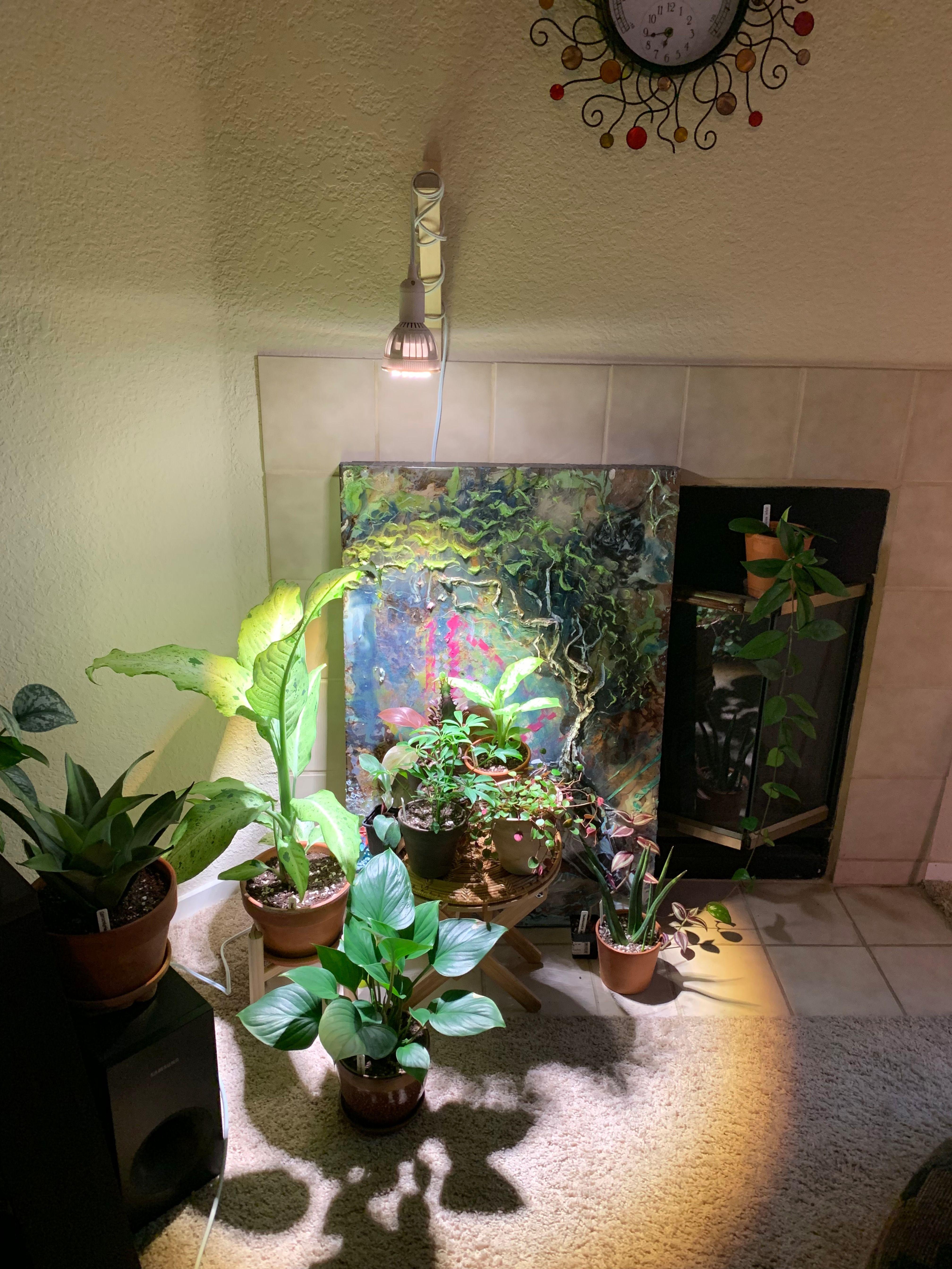 Indoor hydroponic garden under HID Metal Halide plant grow