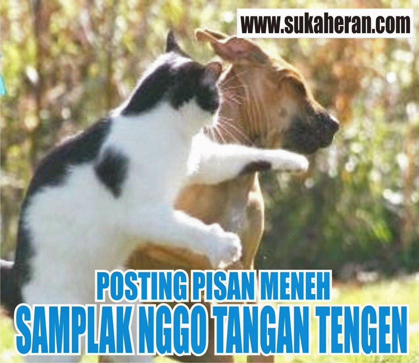 Download 92 Koleksi Gambar Lucu Numpang Lewat Bahasa Jawa