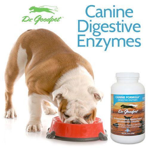 Canine Digestive Enzymes 7 Oz Dog Food Recipes Holistic Dog