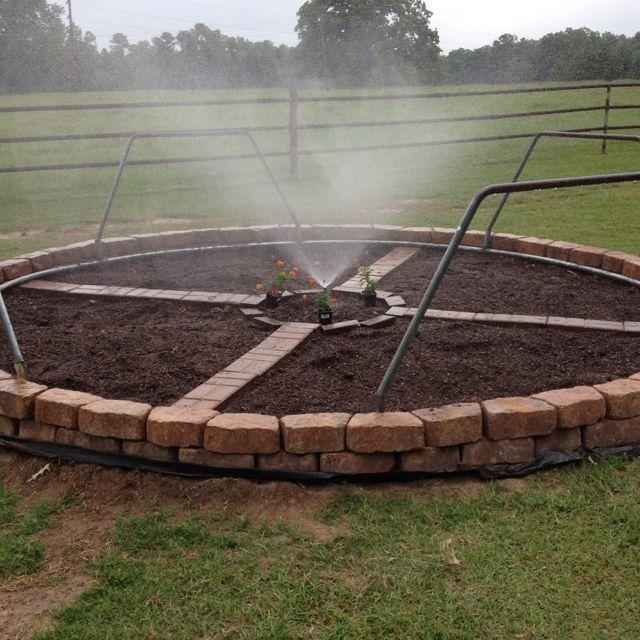 New veggie & herb garden. Repurpose old trampoline frame. With sprinkler in center