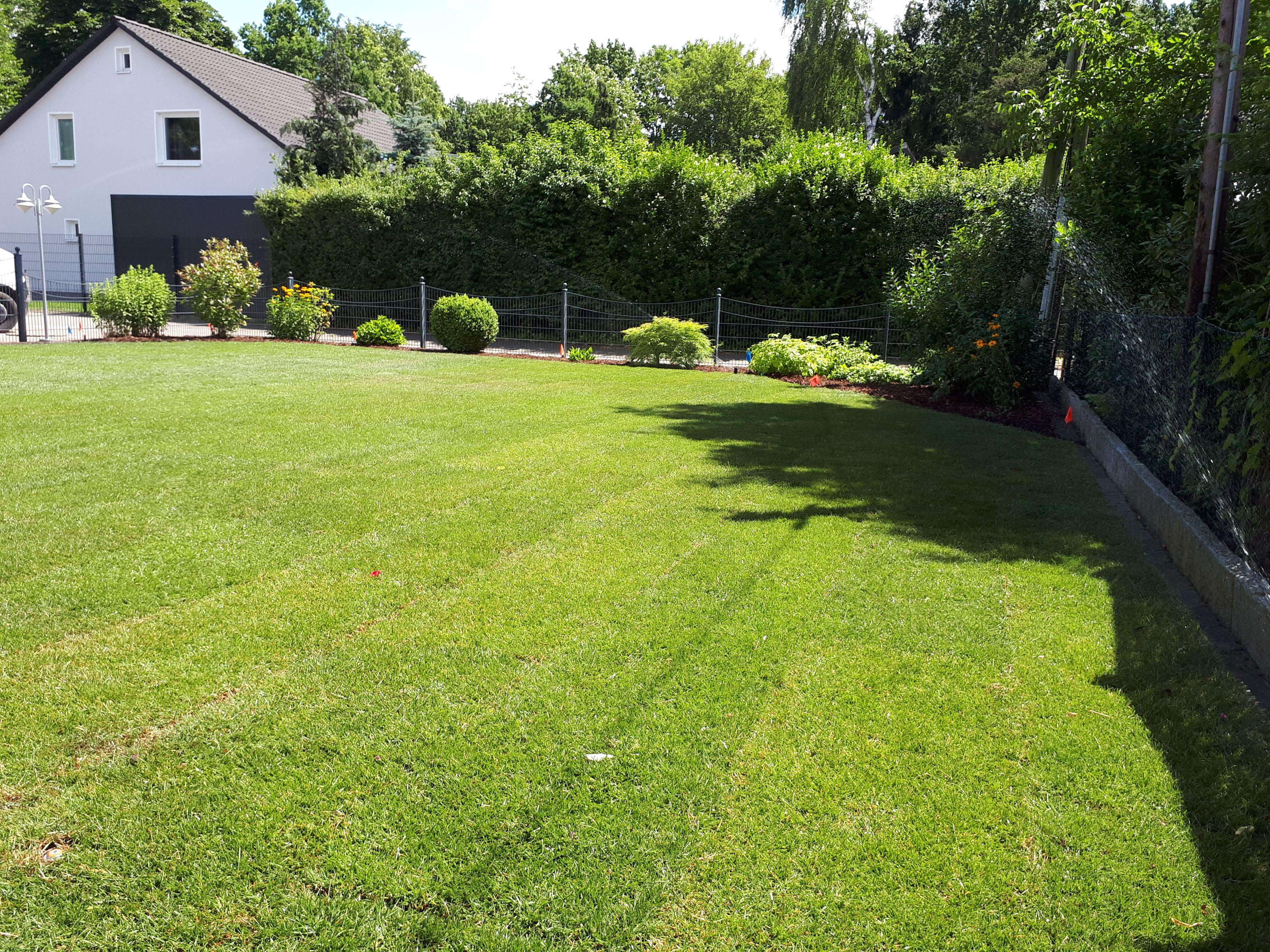 Rollrasen Verlegen Gartengestaltung Rasen Garten