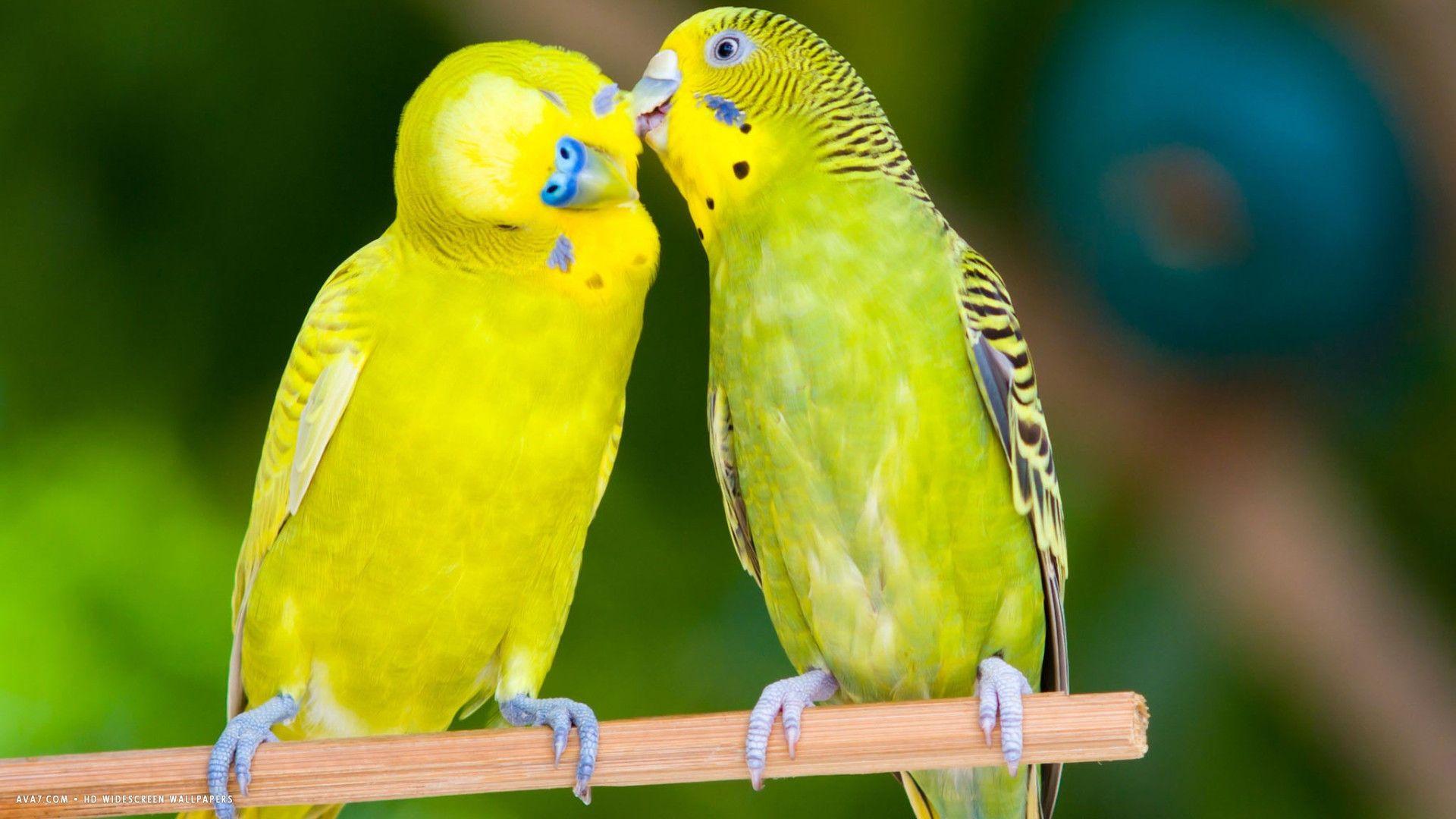 birds hd desktop wallpapers